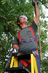 Mann schneidet Baum